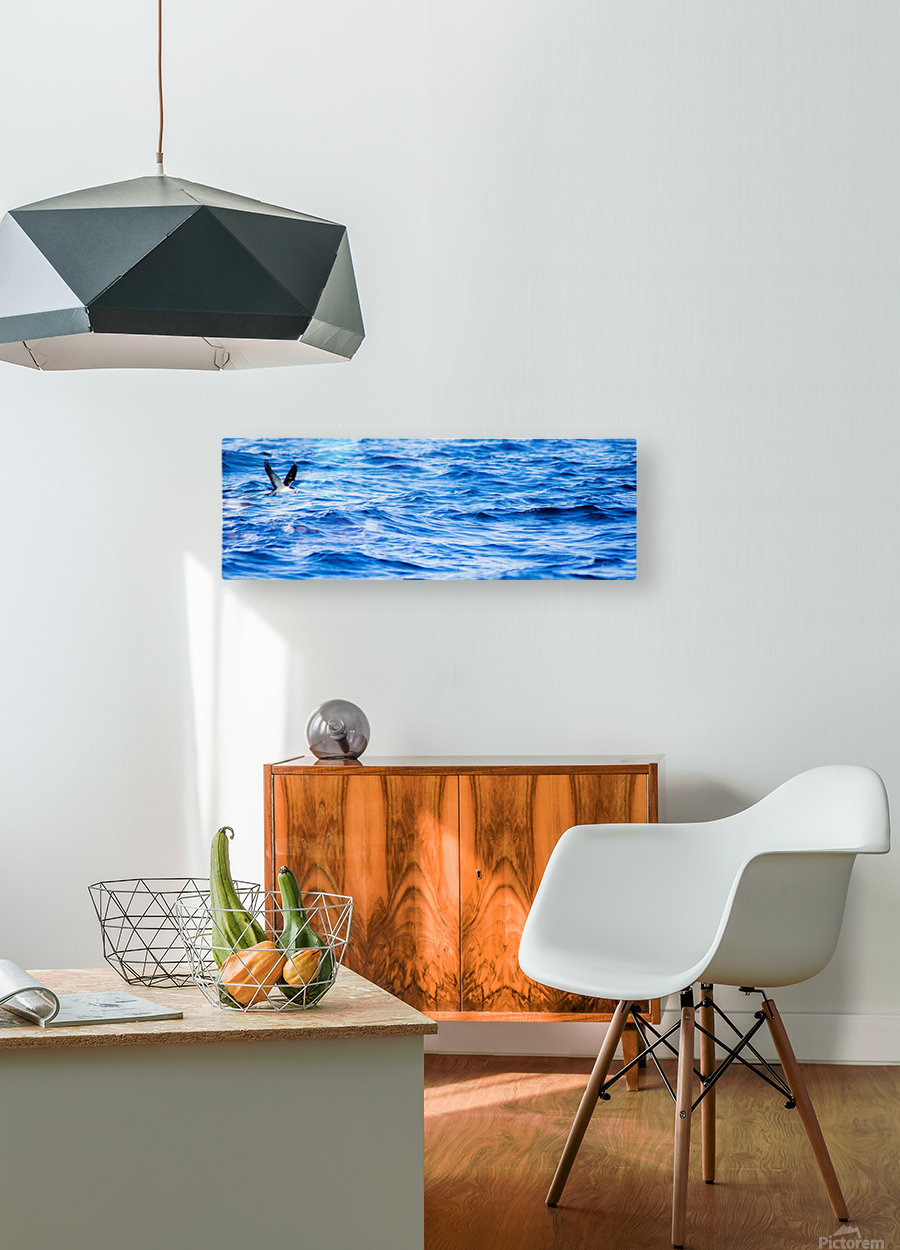 Tern  HD Metal print with Floating Frame on Back