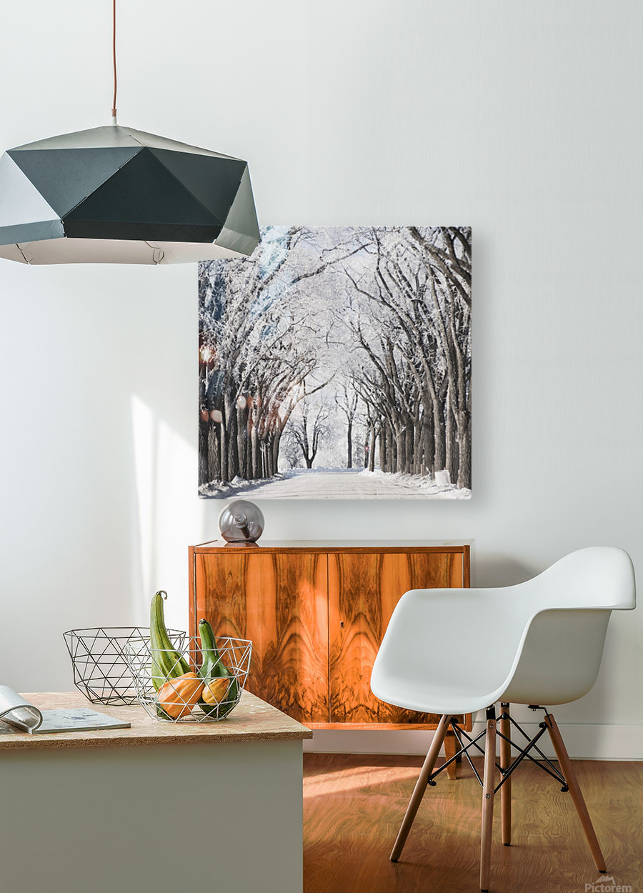 Winnipeg, Manitoba, Canada; A Road And Trees Covered In Snow In Winter  HD Metal print with Floating Frame on Back