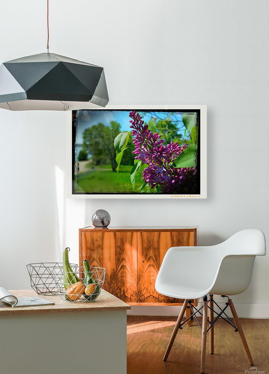 Purple Flowers  Impression métal HD avec cadre flottant sur le dos