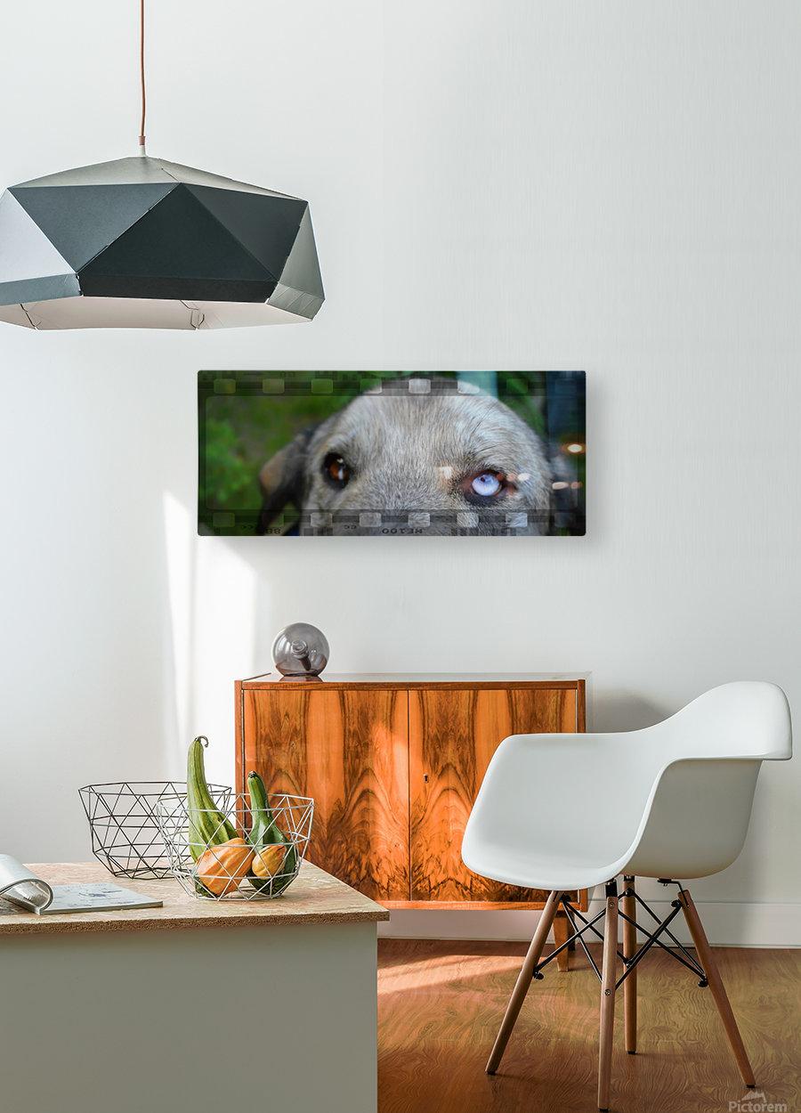 Blue Eyed Dog  Impression métal HD avec cadre flottant sur le dos