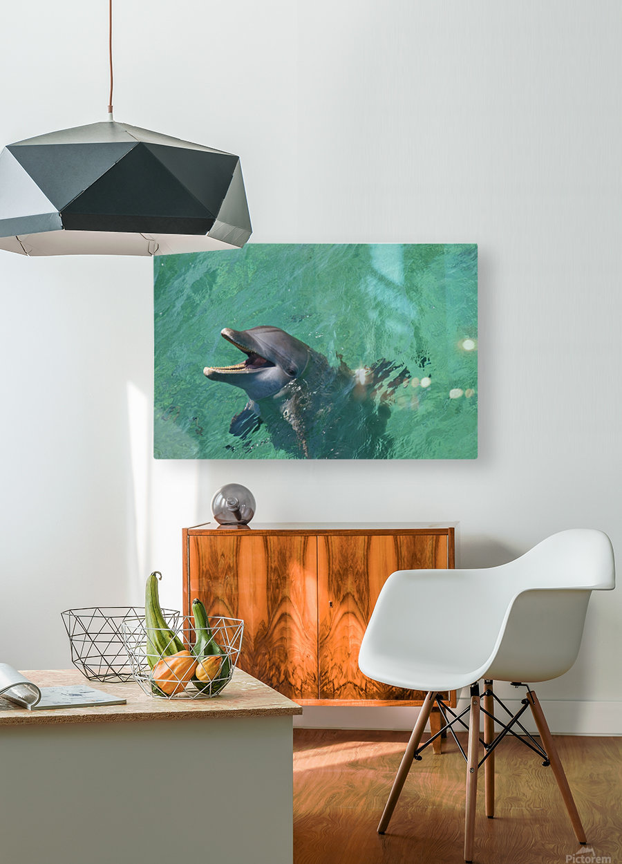 Roatan, Bay Islands, Honduras; Bottlenose Dolphin (Tursiops Truncatus) At Anthony's Key Resort  HD Metal print with Floating Frame on Back