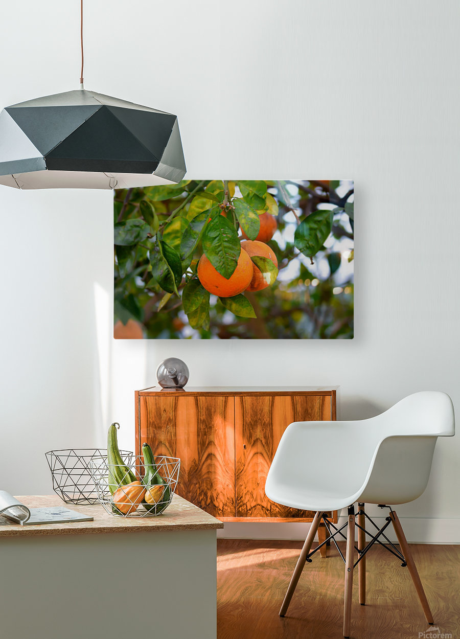 Oranges  HD Metal print with Floating Frame on Back