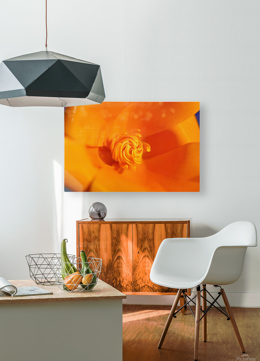 Close Up Of A Poppy Flower; Happy Valley, Oregon, Usa  HD Metal print with Floating Frame on Back