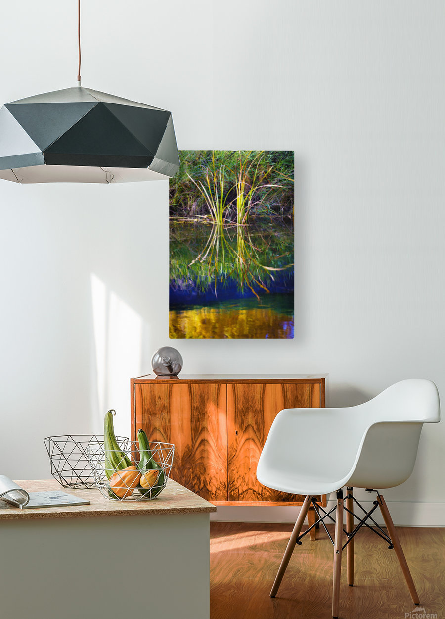 Reeds Reflecting On The Water; St. Albert, Alberta, Canada  HD Metal print with Floating Frame on Back