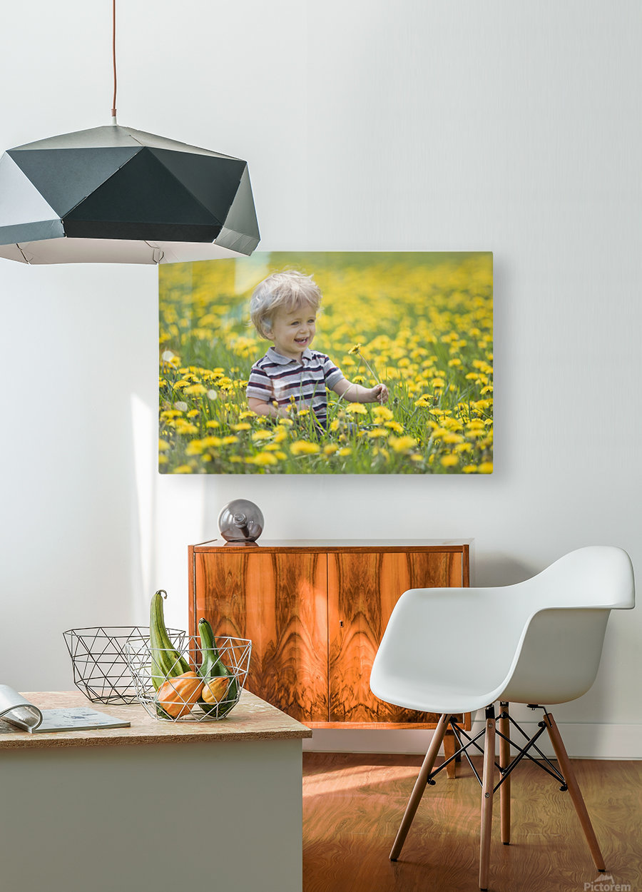 18-Month-Old Boy In Dandelion Field; Thunder Bay, Ontario, Canada  HD Metal print with Floating Frame on Back