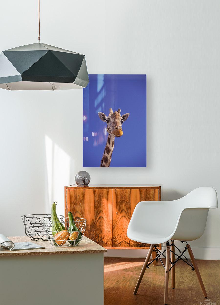 Masai Giraffe, Serengeti, Africa  HD Metal print with Floating Frame on Back