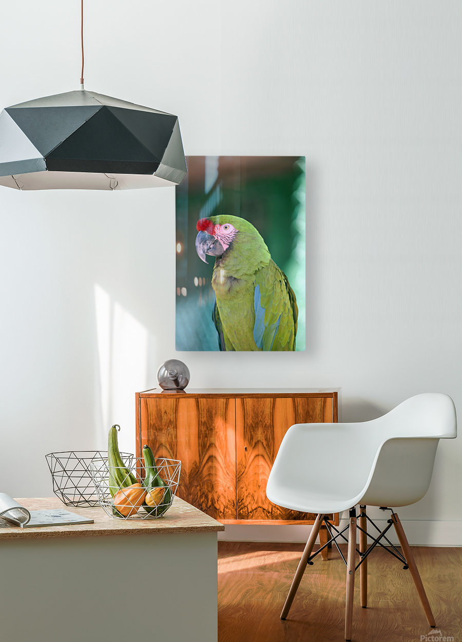 Close up of a parrot;Puerto vallarta mexico  HD Metal print with Floating Frame on Back