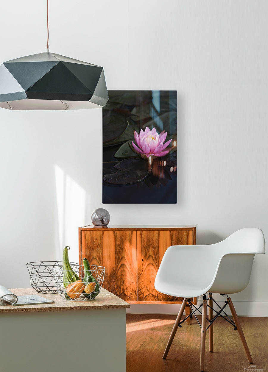A water lily blooms in a pond; Astoria, Oregon, United States of America  HD Metal print with Floating Frame on Back