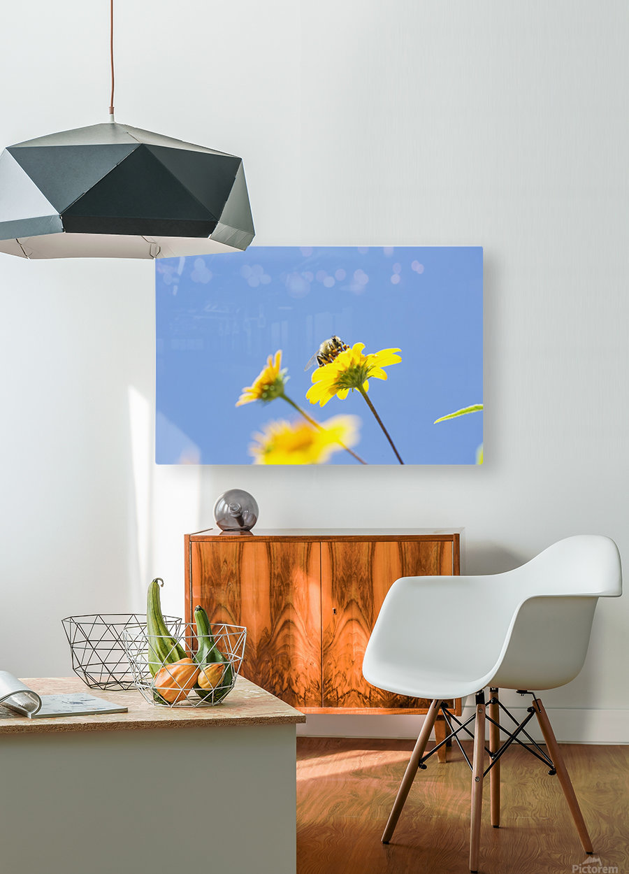 A bee is busy pollenating flowers as it goes about it's job collecting pollen; Bolivia  HD Metal print with Floating Frame on Back