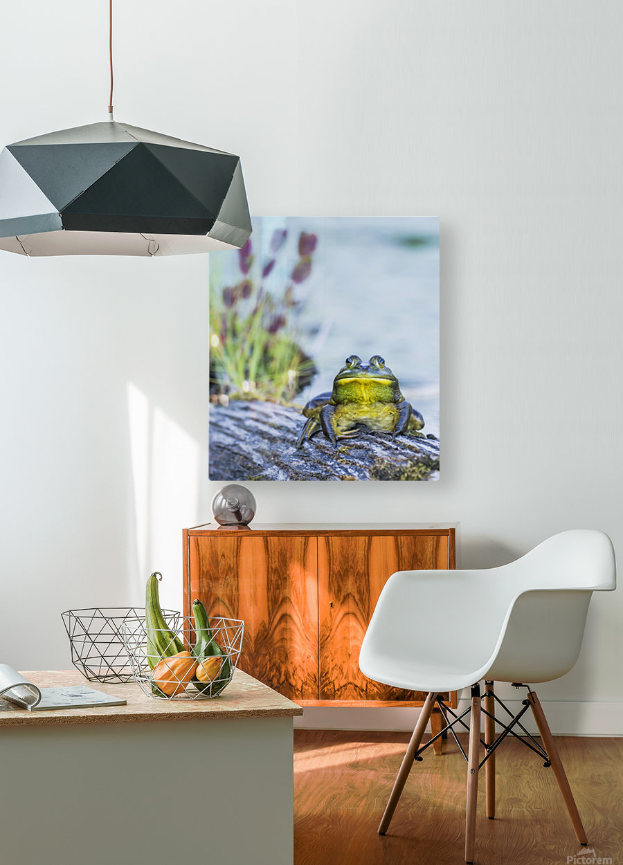 Bull frog (rana catesbeiana) resting on a log beside a lake; Ontario, Canada  HD Metal print with Floating Frame on Back
