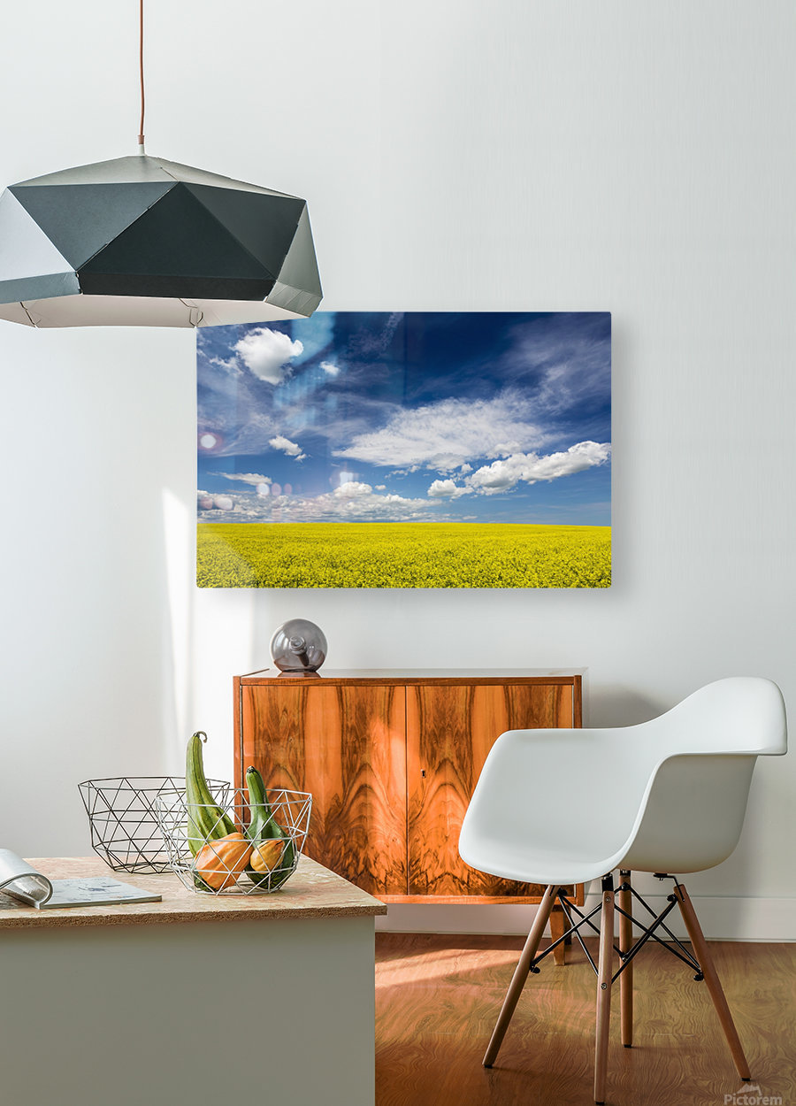 Flowering canola field with clouds and blue sky; Alberta, Canada  HD Metal print with Floating Frame on Back