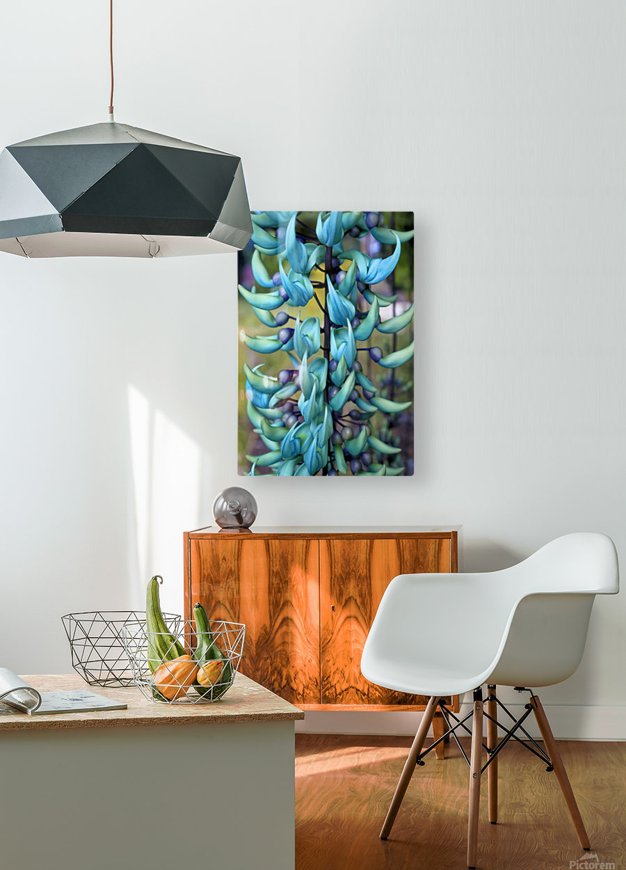 Blue jade plant; Hawaii, United States of America  HD Metal print with Floating Frame on Back
