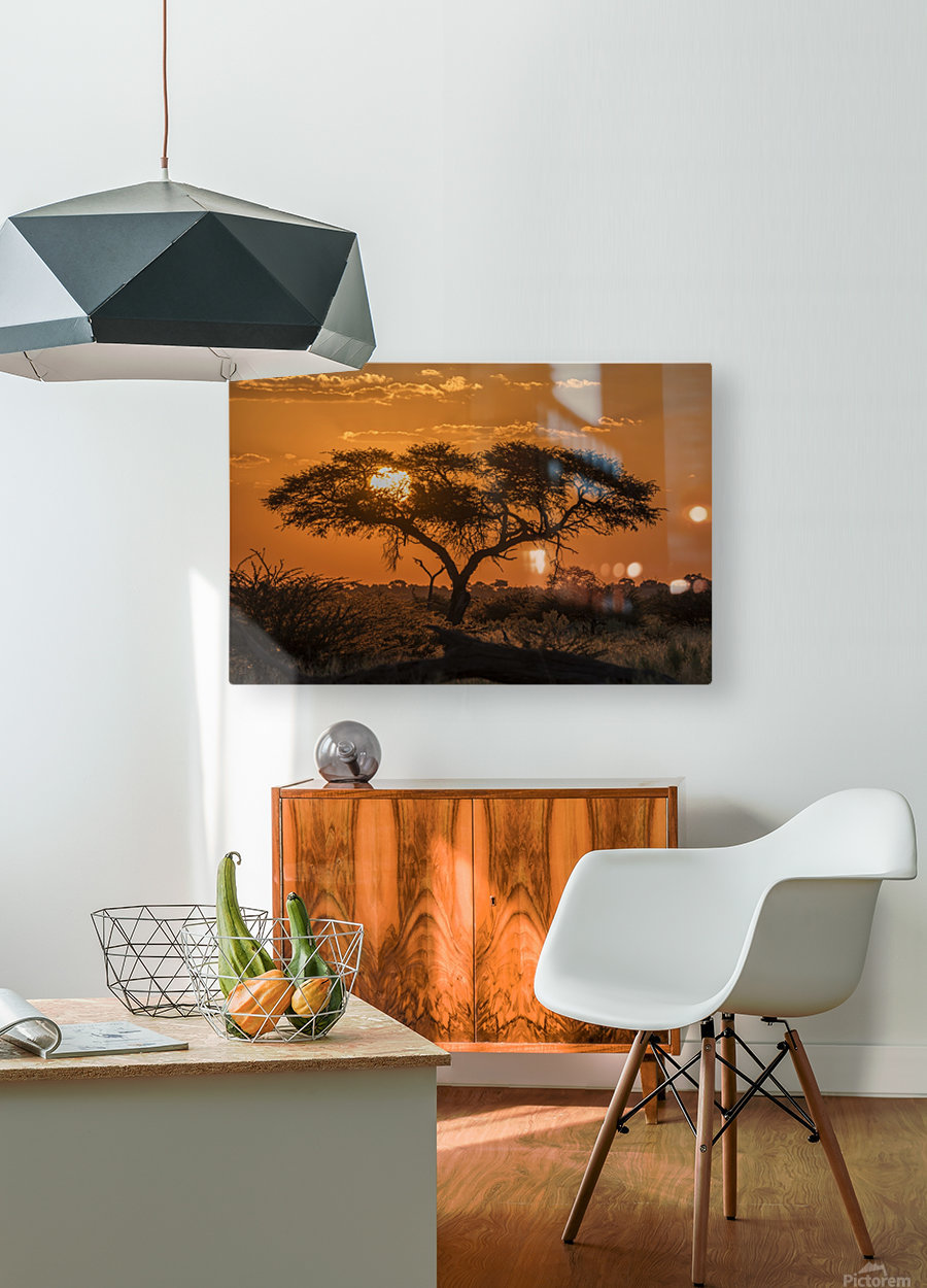 Silhouette of acacia tree at orange sunset; Botswana  HD Metal print with Floating Frame on Back