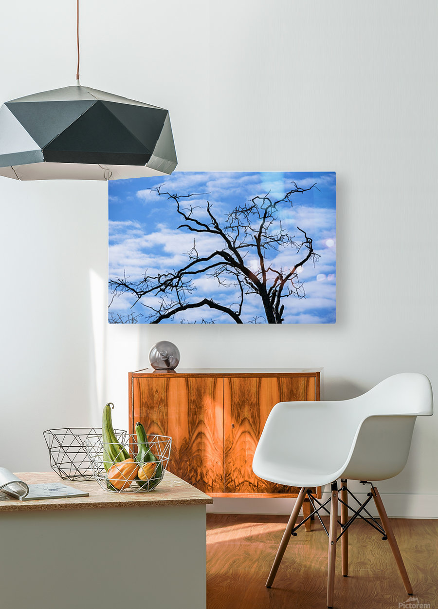 A dead tree is silhouetted against the sky; Tahlequah, Oklahoma, United States of America  HD Metal print with Floating Frame on Back
