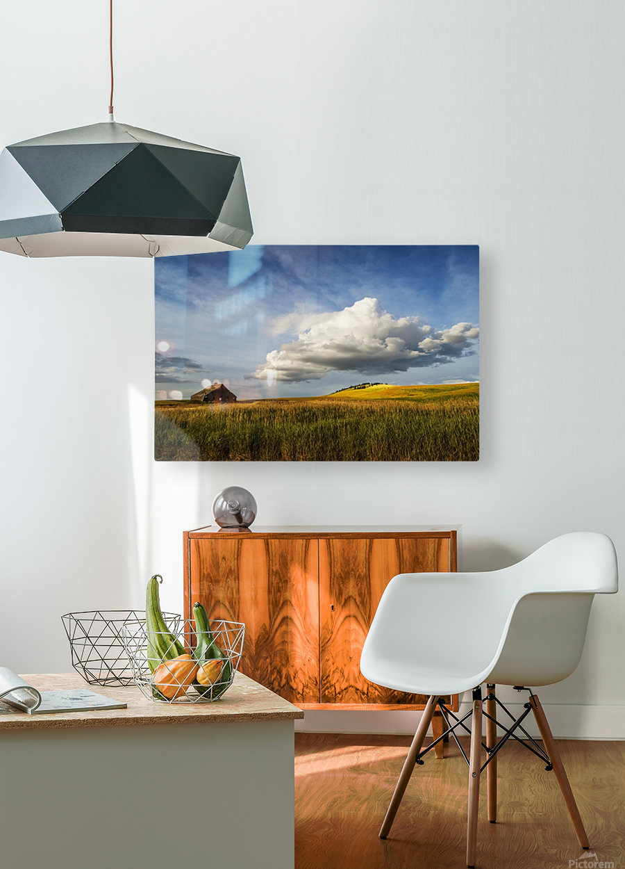 Wheat field and old wooden barn; Palouse, Washington, United States of America  HD Metal print with Floating Frame on Back