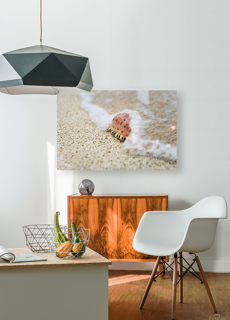 A close up of a cowry shell on the beach; St. Croix, Virgin Islands, United States of America  HD Metal print with Floating Frame on Back