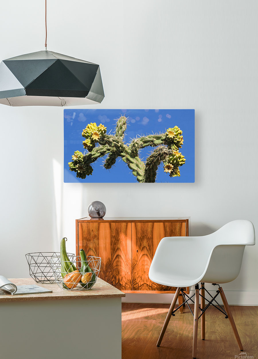 Cactus in bloom  HD Metal print with Floating Frame on Back