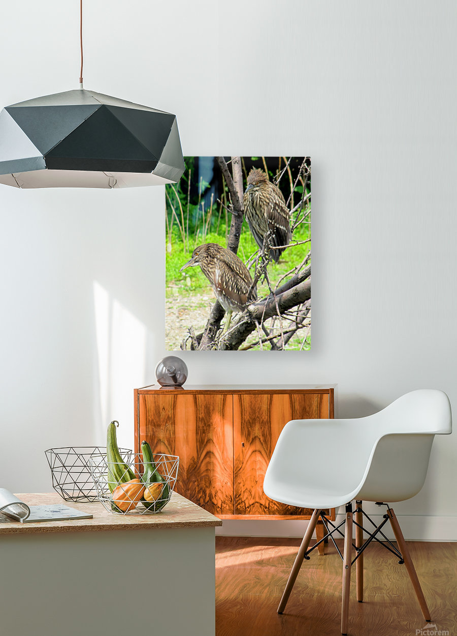 Birds in Lincoln Park   HD Metal print with Floating Frame on Back