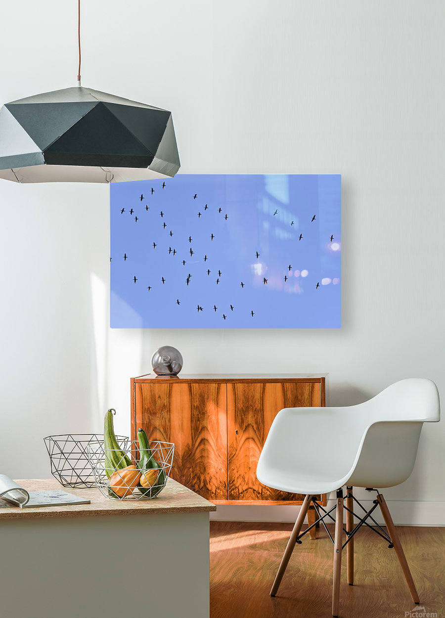 Flock of Geese 1  HD Metal print with Floating Frame on Back