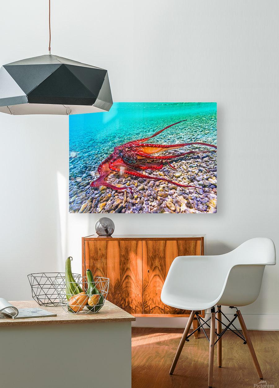 Tako run  HD Metal print with Floating Frame on Back