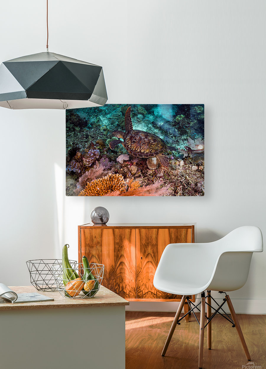 Clean turtle  HD Metal print with Floating Frame on Back