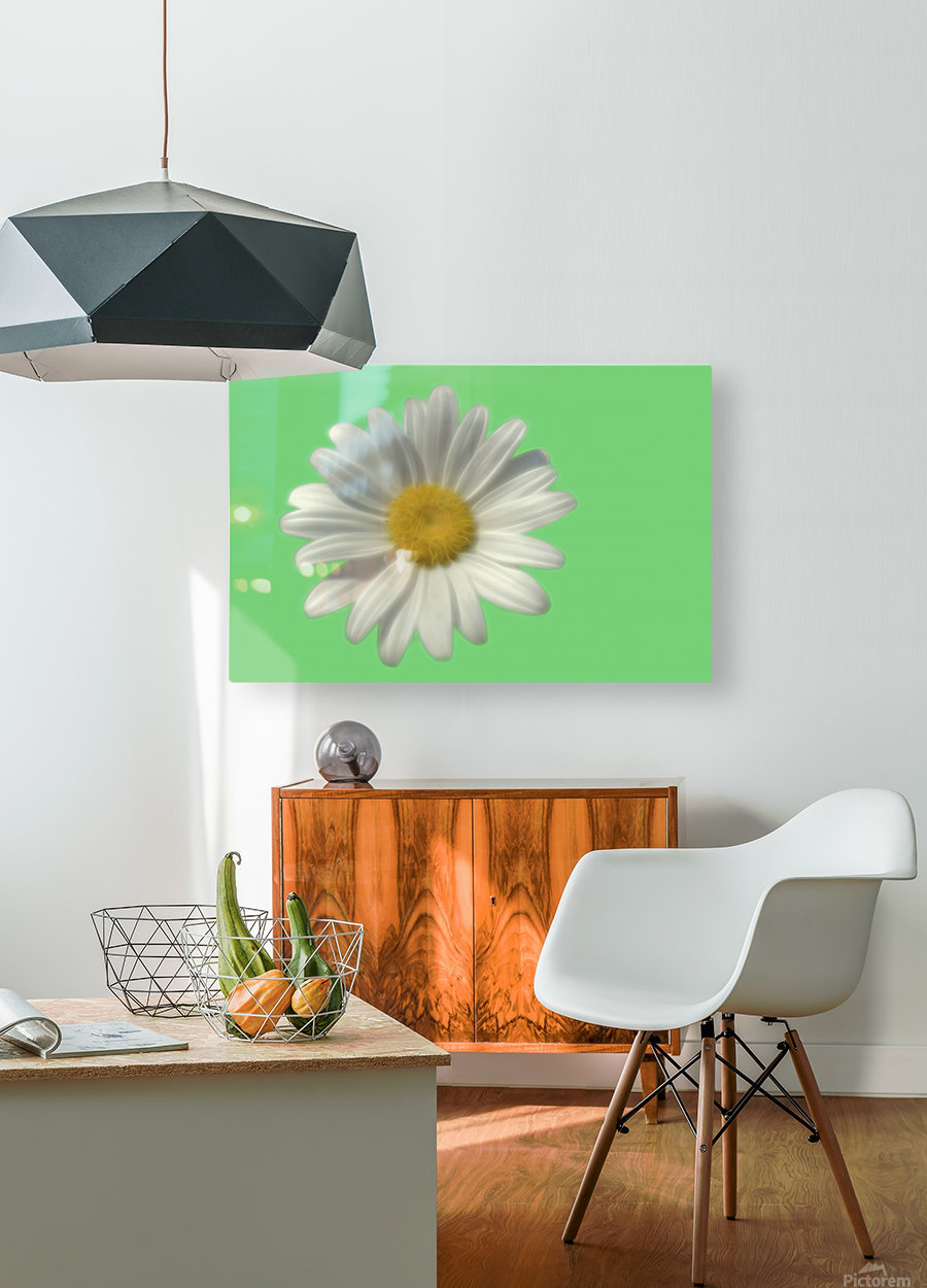 Soft bloom daisy  HD Metal print with Floating Frame on Back