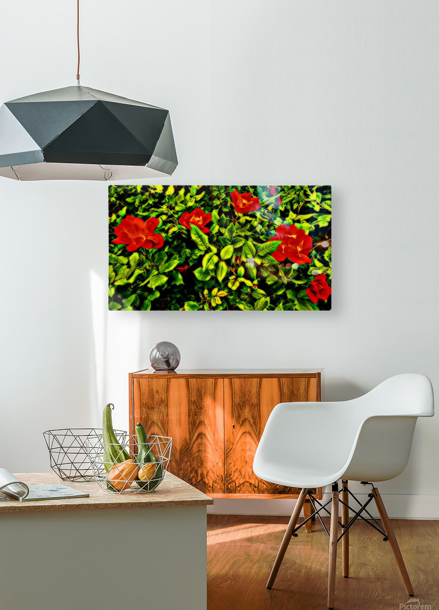 roselooking  HD Metal print with Floating Frame on Back