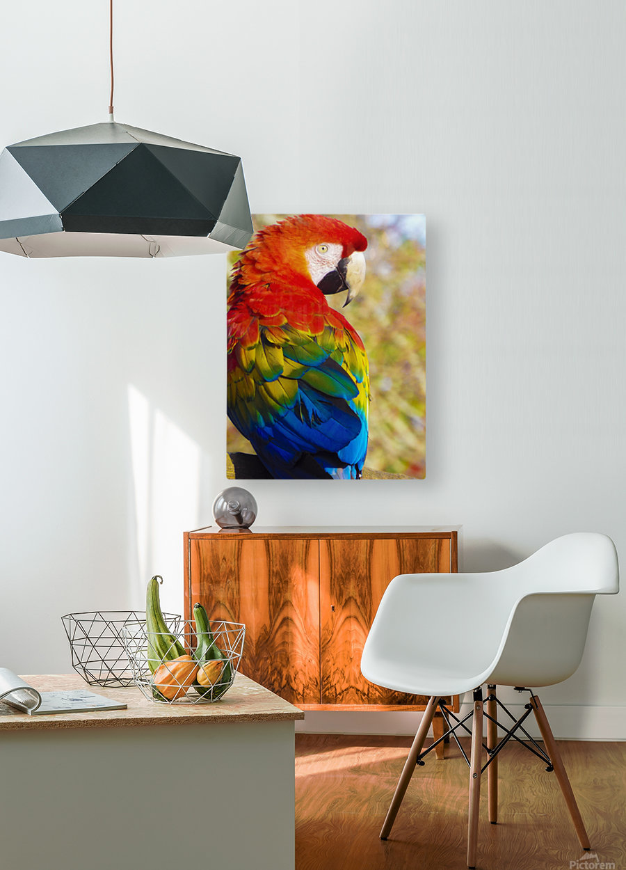 All the Colors of the Rainbow  HD Metal print with Floating Frame on Back