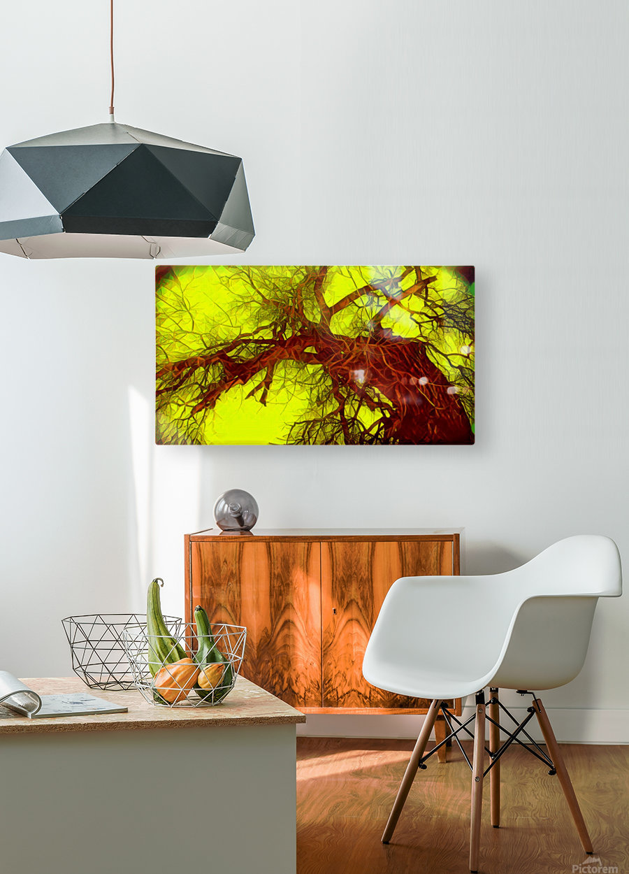 100yearoldtreeNUMBERtwo  HD Metal print with Floating Frame on Back