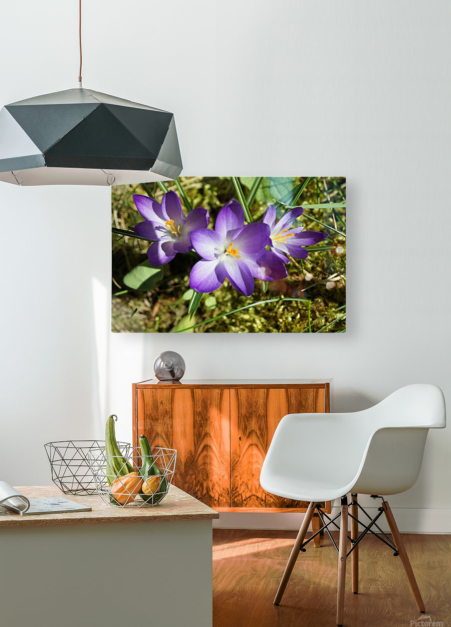 DSC06574  HD Metal print with Floating Frame on Back
