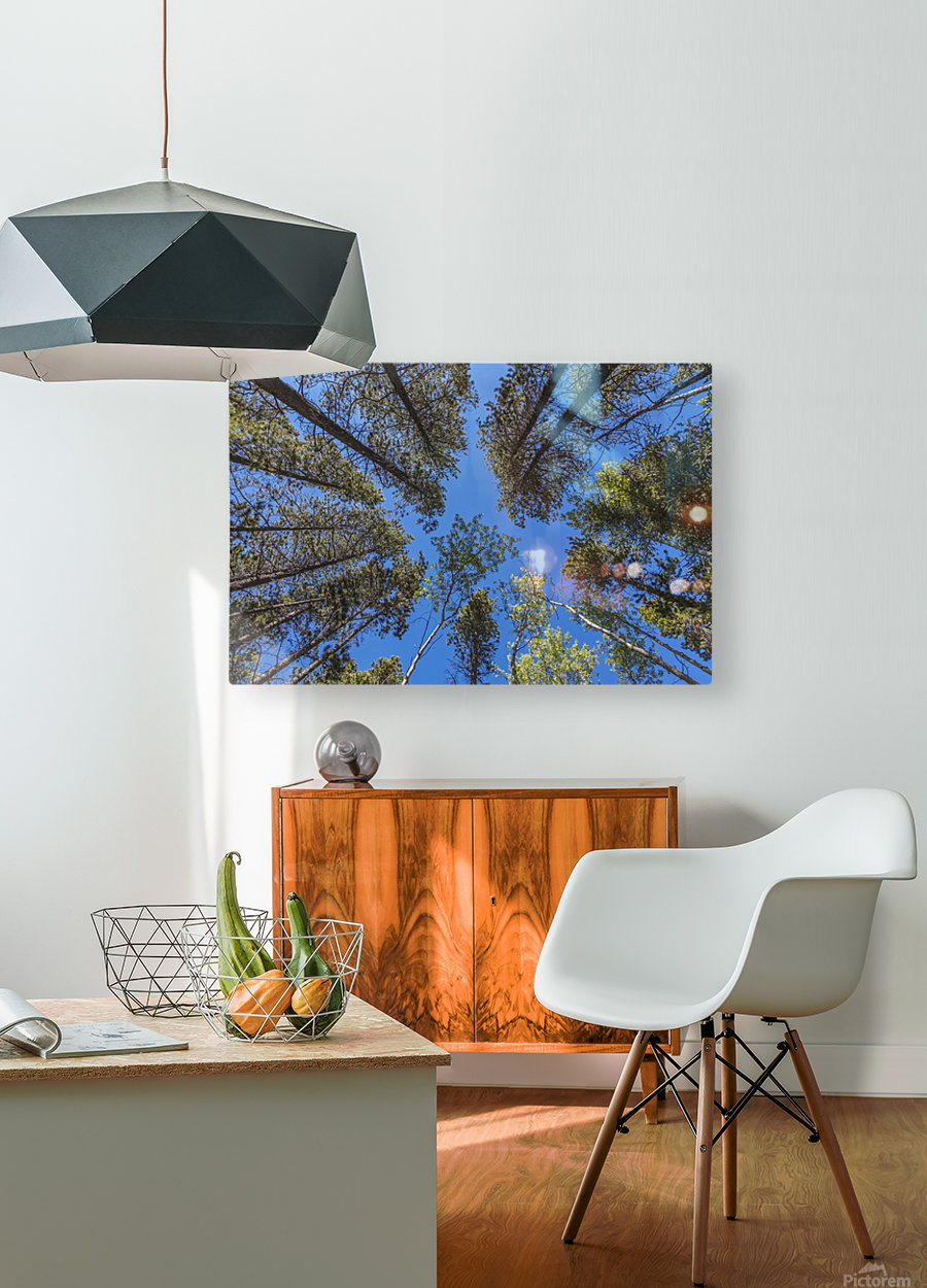 Tree Tops Near Grassi Lake Trail, Alberta  HD Metal print with Floating Frame on Back