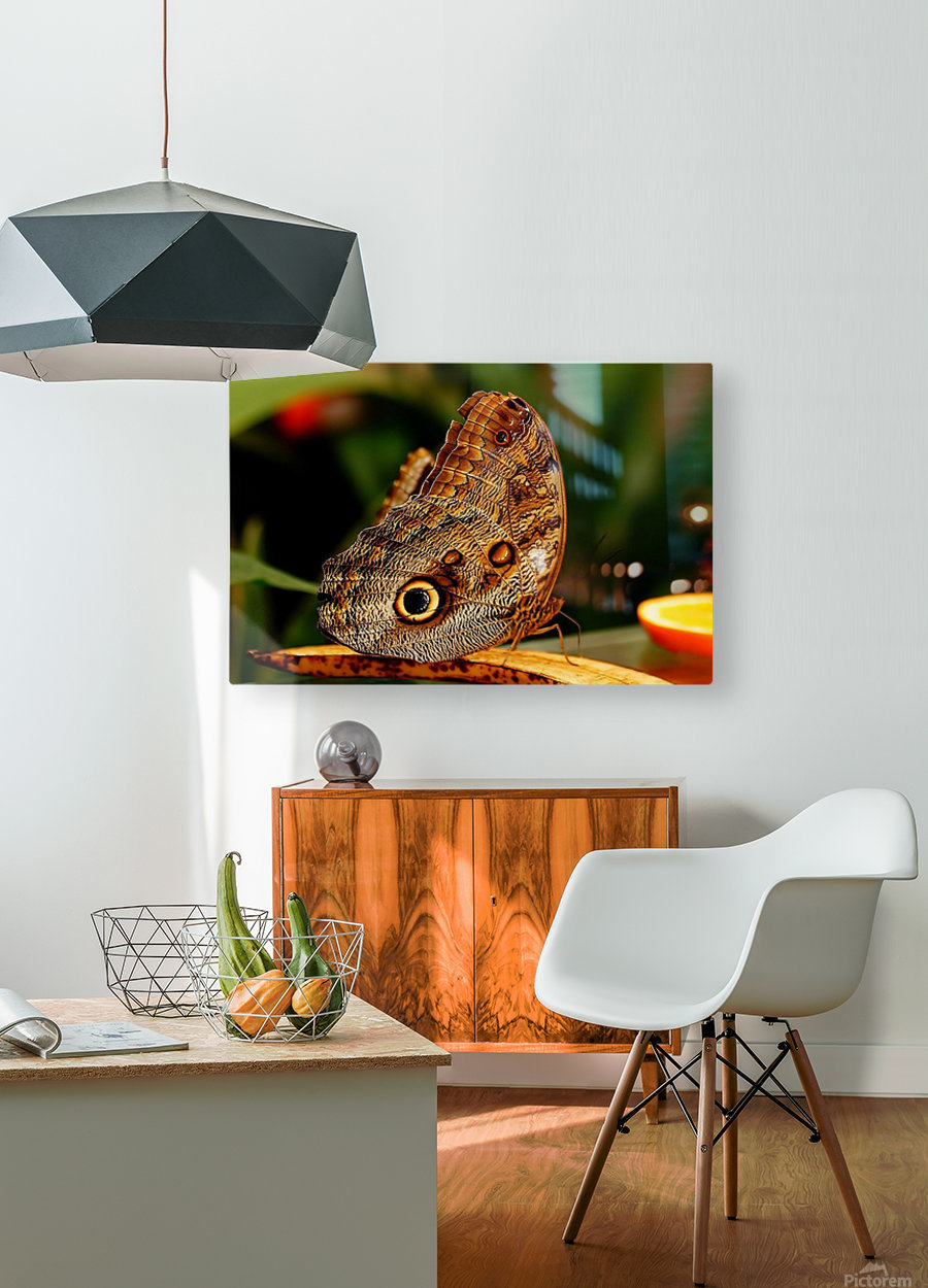 Morph  HD Metal print with Floating Frame on Back