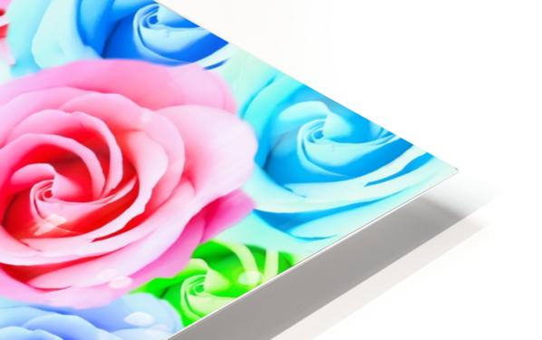 closeup colorful rose texture background in pink purple blue green HD Sublimation Metal print