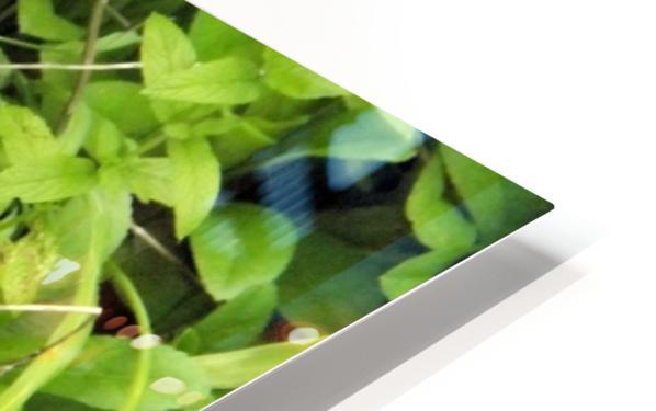 Oranger Lilly 4 Impression de sublimation métal HD
