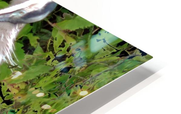 GreatBlueHeron HD Sublimation Metal print