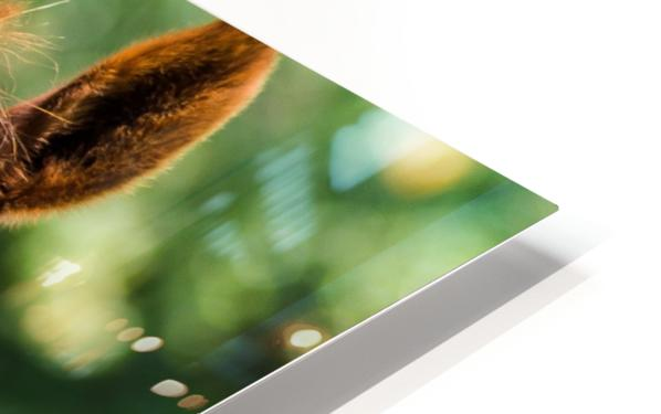 Double Vision  HD Sublimation Metal print