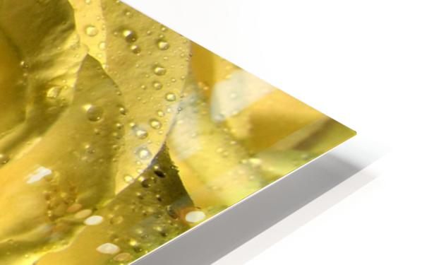 Yellow dew HD Sublimation Metal print