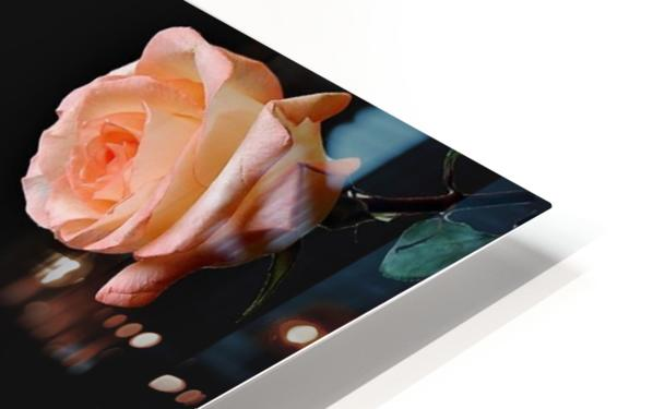 Crazy Roses HD Sublimation Metal print