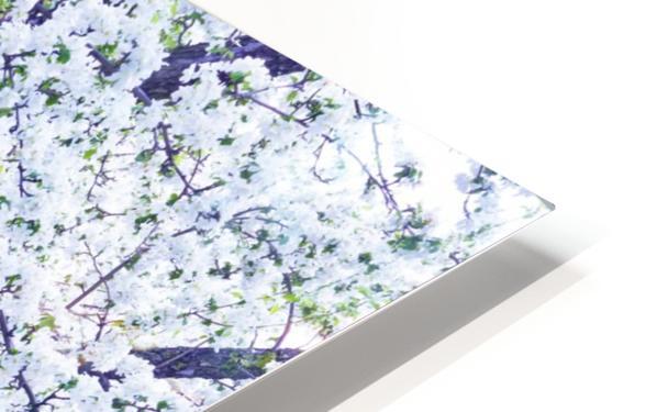 Cherry tree flowers HD Sublimation Metal print