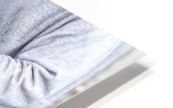 Snowcrab HD Sublimation Metal print