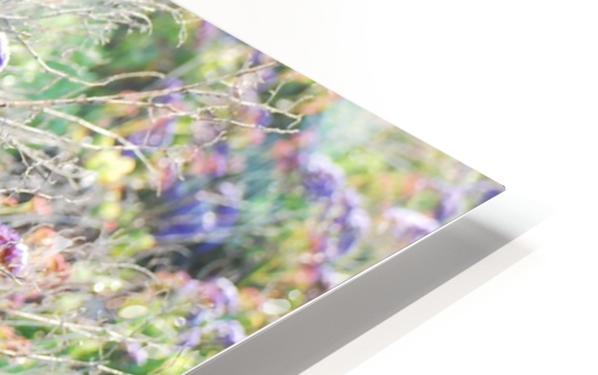Purple Wild Flowers in Dana Point CA HD Sublimation Metal print