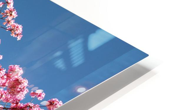 Cherry Blossom on Blue HD Sublimation Metal print