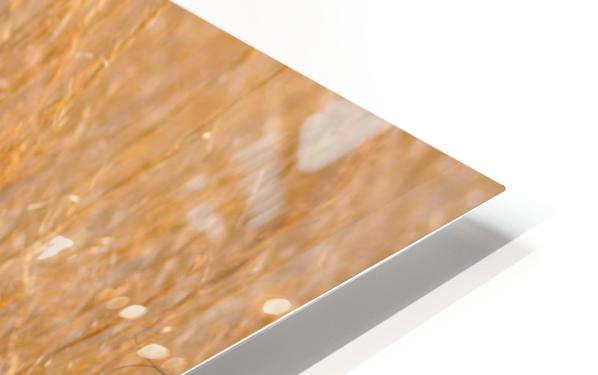 Golden Field HD Sublimation Metal print