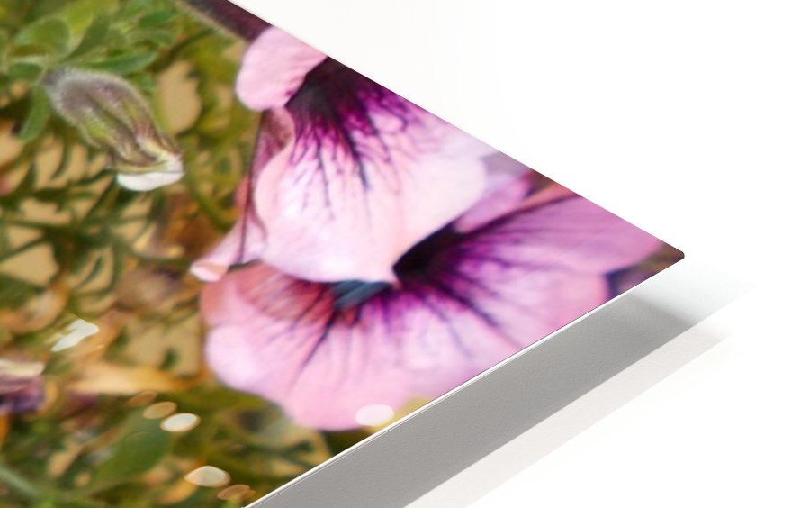 DSCN0649 HD Sublimation Metal print