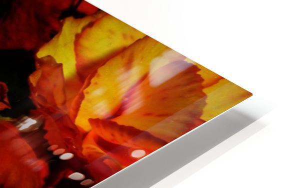 D (5) HD Sublimation Metal print