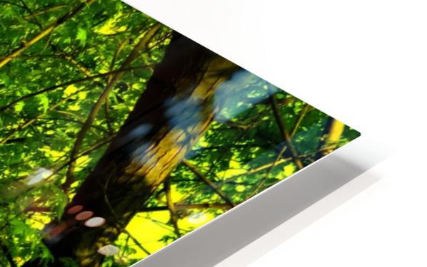 F (3) HD Sublimation Metal print