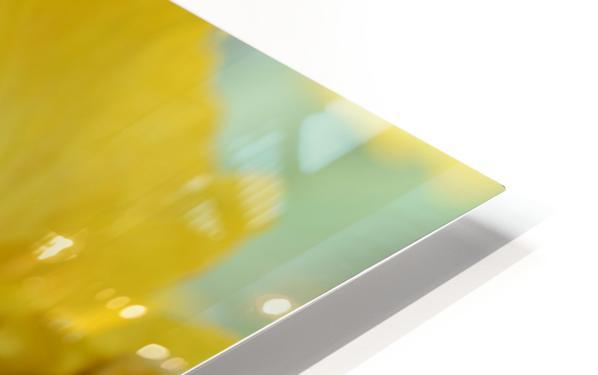 Yellow Iris Photograph HD Sublimation Metal print