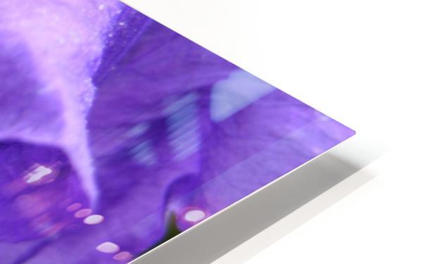 Blue Iris Photograph HD Sublimation Metal print