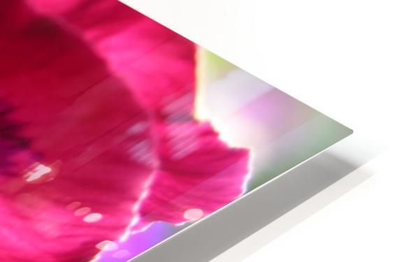 Pink Pansy Photograph HD Sublimation Metal print