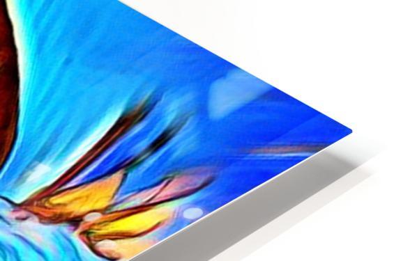 Dog_Splash_OSG HD Sublimation Metal print